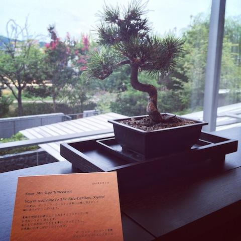 The Ritz-Carlton Kyoto Bonsai